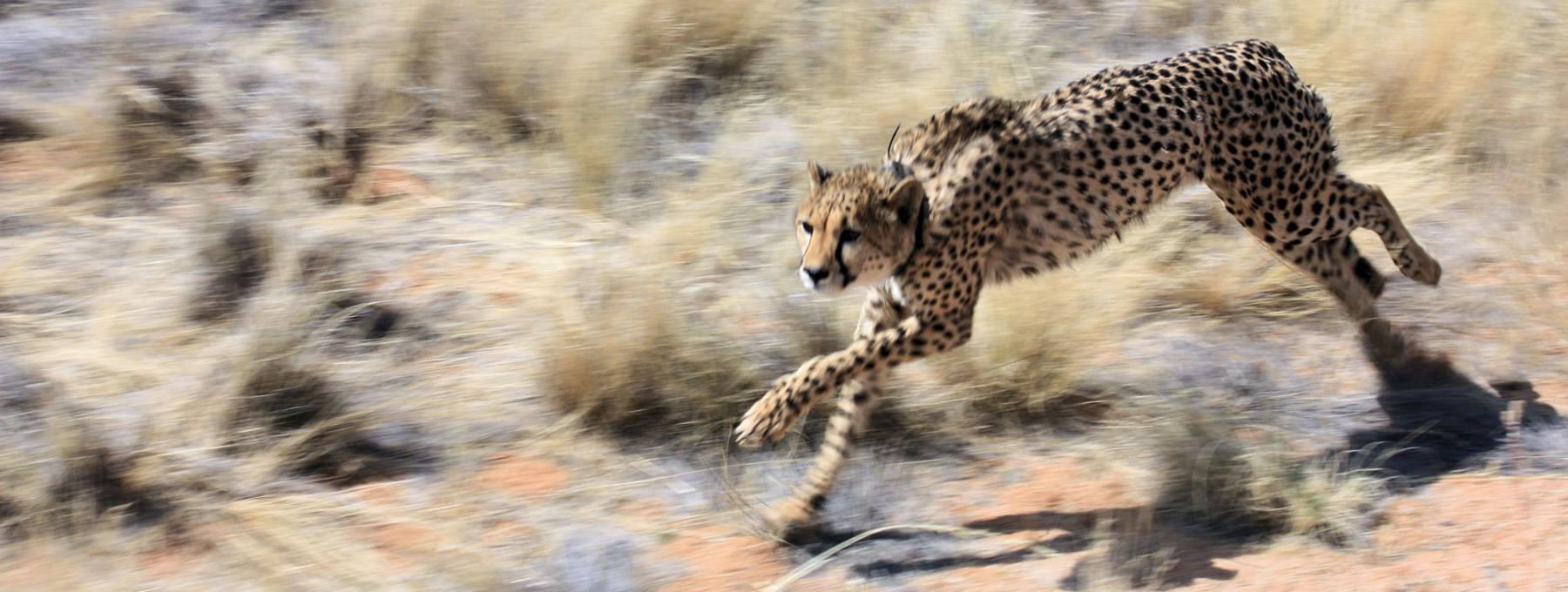 Auslandsaufenthalt Namibia