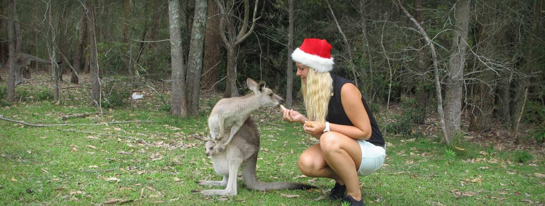 weihnachten in australien travel tipps australien stepin. Black Bedroom Furniture Sets. Home Design Ideas