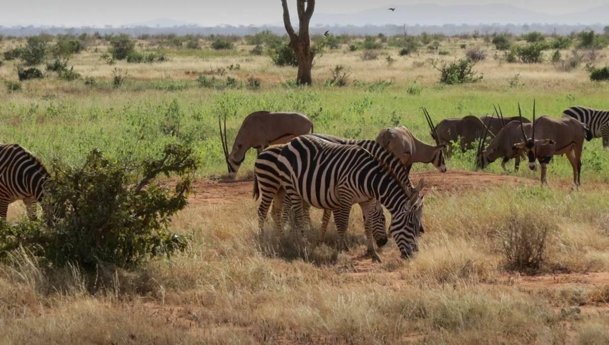 Auslandsaufenthalt Swasiland