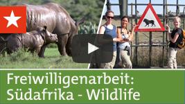 Freiwilligenarbeit Südafrika: Wildlife