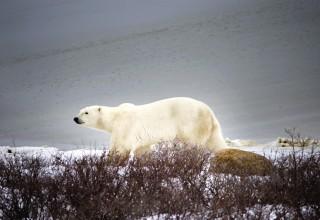 Gerd in Kanada #2: Auf der Suche nach den Eisbären