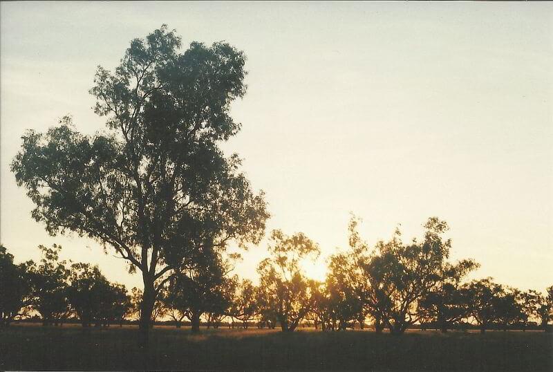 Die Sonne strahlt durch Bäume des Outbacks