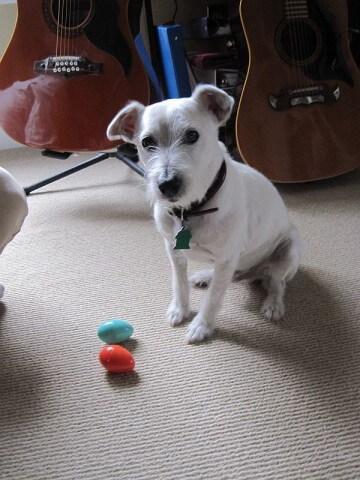 Der Hund spielt mit den Ostereiern