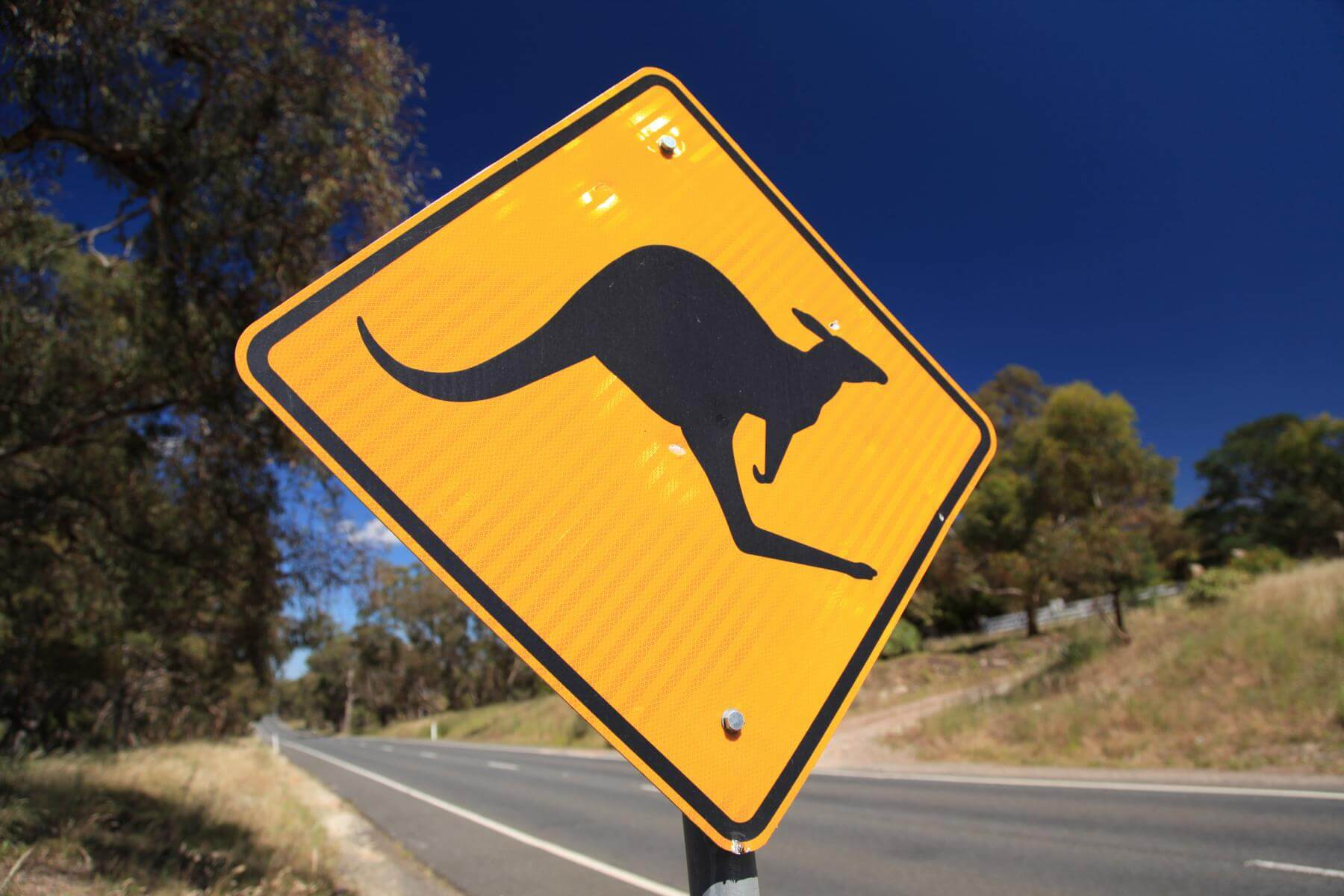 Schild: Caution – Kangaroos!