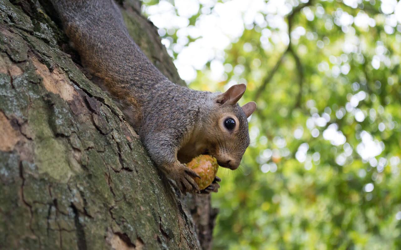 Ein Eichhörnchen an einem Baum