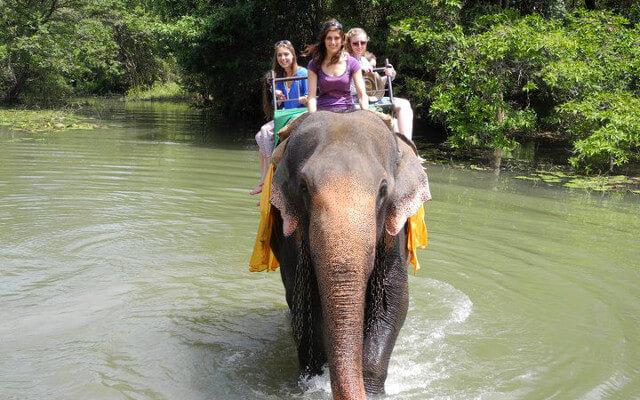 Drei unserer Steppies auf dem Rücken eines Elefanten