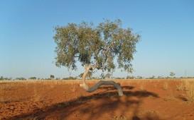 Campen in Austalien: Der rote Sandstein im Outback