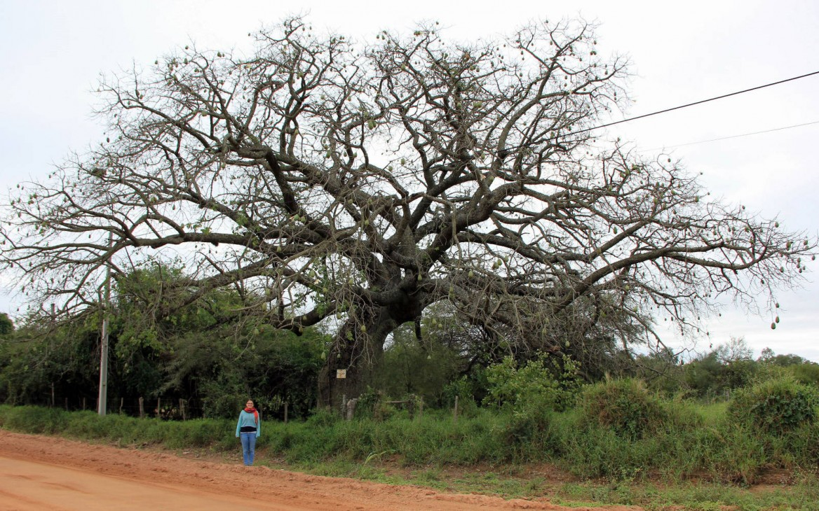 Miriam in Paraguay #5: Über Quebracho, Palo Santo und Samu'ú