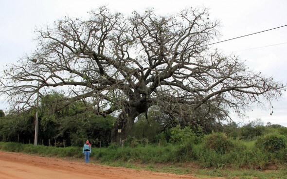 Freiwilligenarbeit: Miriam vor einem Flaschenbaum
