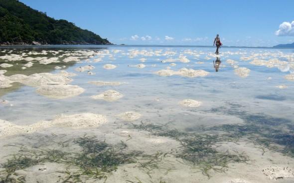 Wattlandschaft auf den Seychellen