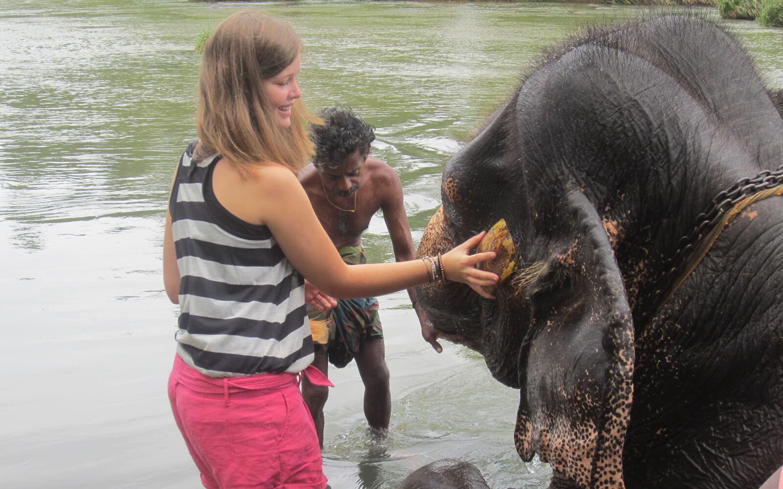 Corinna schrubbt einen Elefant