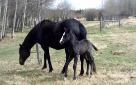Pferde pflegen in Kanada