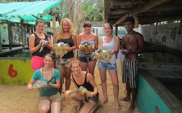 Corinna auf Sri Lanka: Das Schildkröten-Projekt