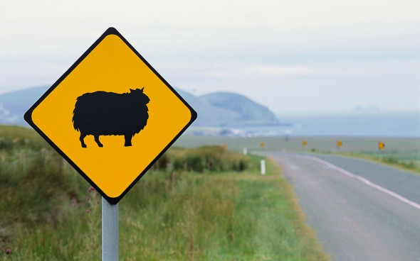 Antonina bei den Iren: ein Sheep Warning Sign