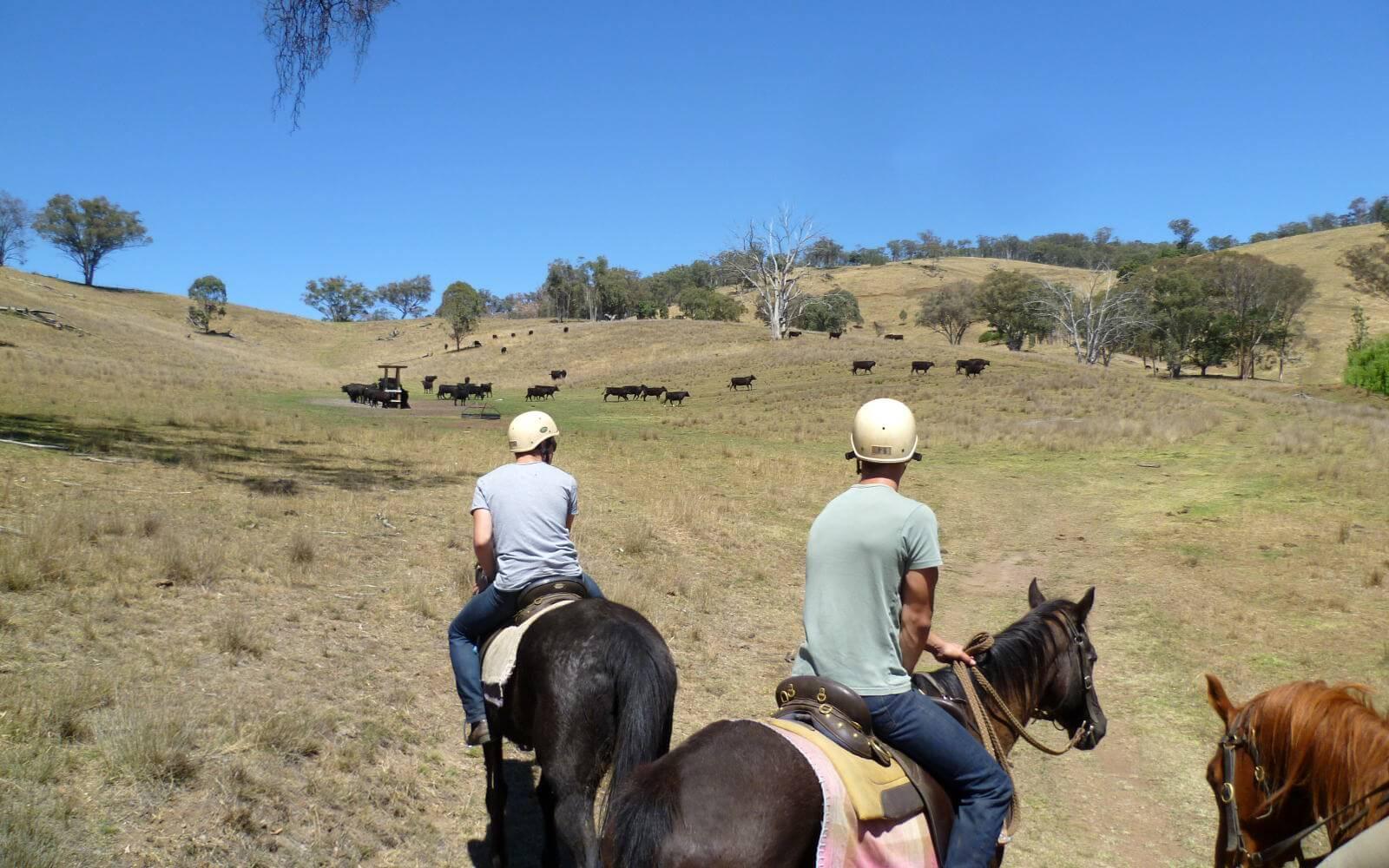 Anna entdeckt Australien: Der Jackaroo Jilaroo Kurs