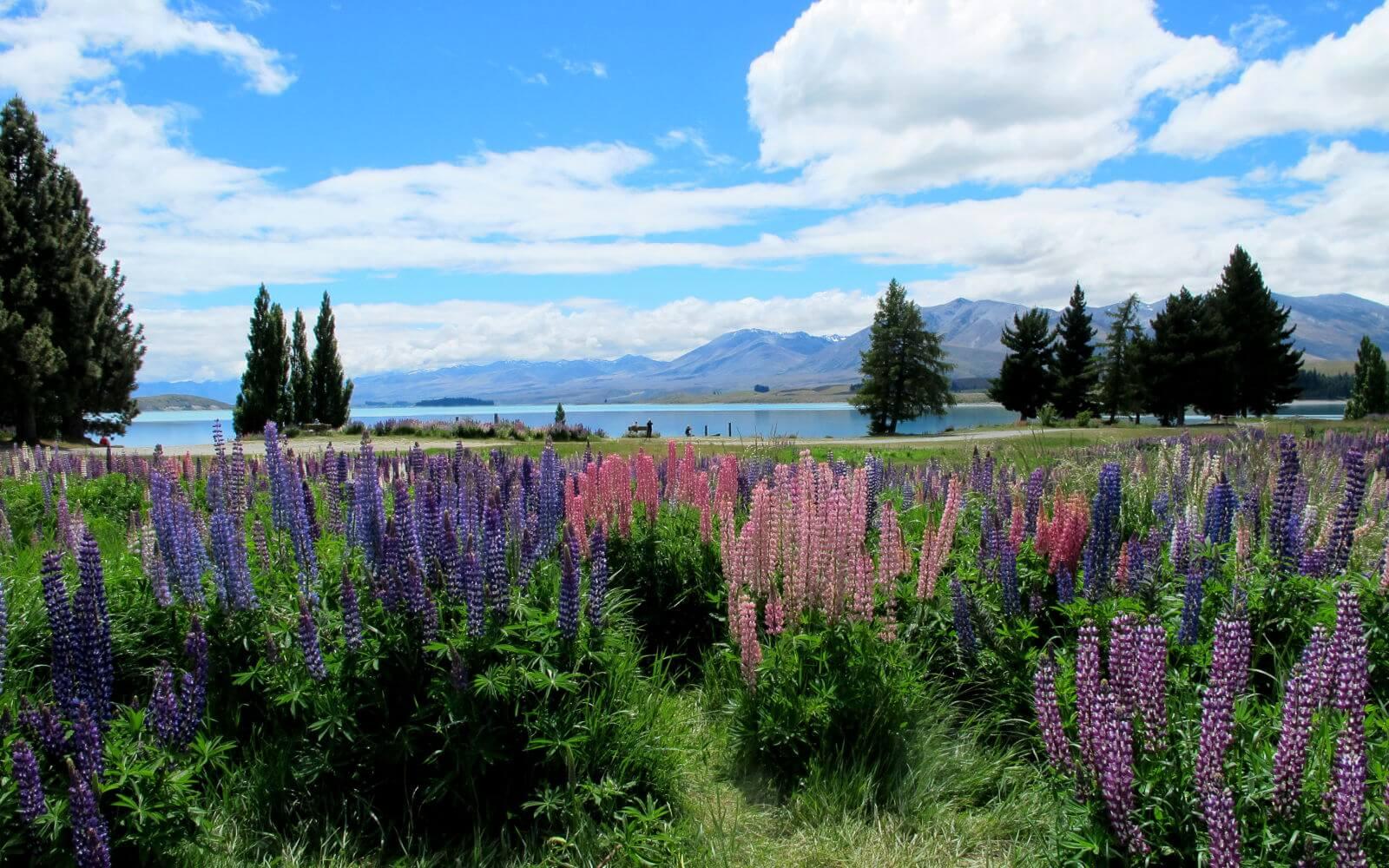 Anna entdeckt Australien: In Neuseeland