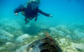 Anna entdeckt Australien: Tauchen am Great Barrier Reef