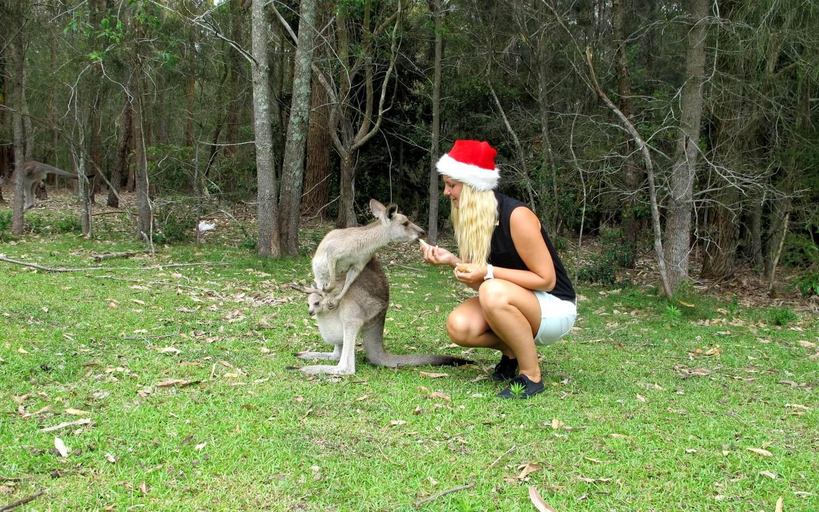 Anna entdeckt Australien: Weihnachten in Down Under