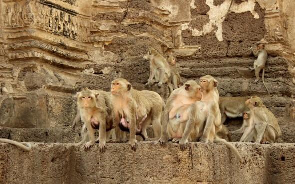 Freiwilligenarbeit in Asien: Affentempel