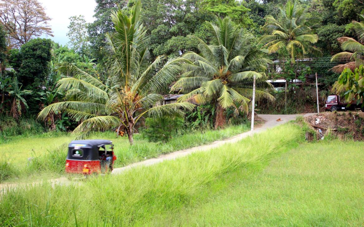 Malina in Asien #6: Auf nach Sri Lanka