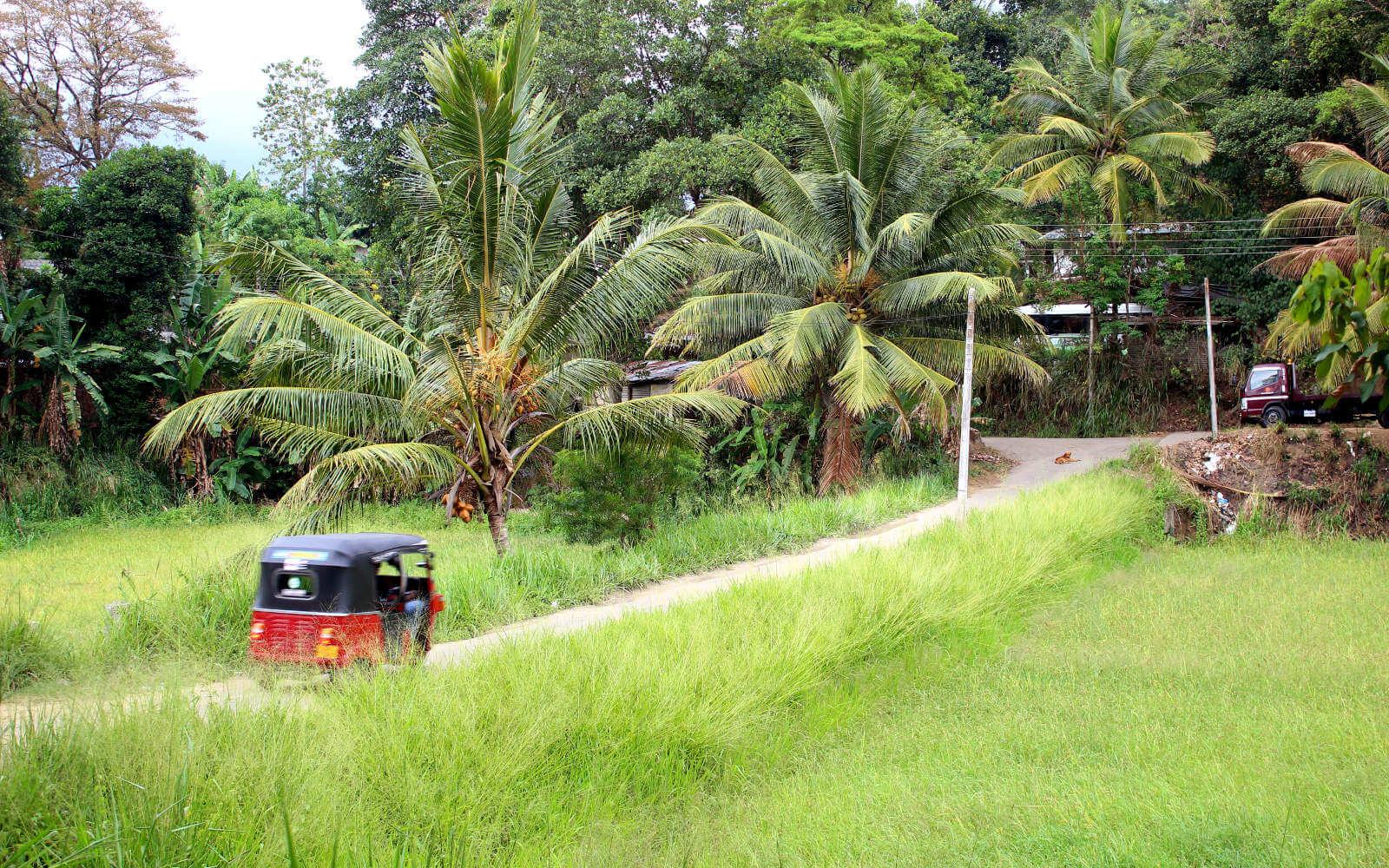 Freiwilligenarbeit in Asien: Nostalgische Autos und Natur