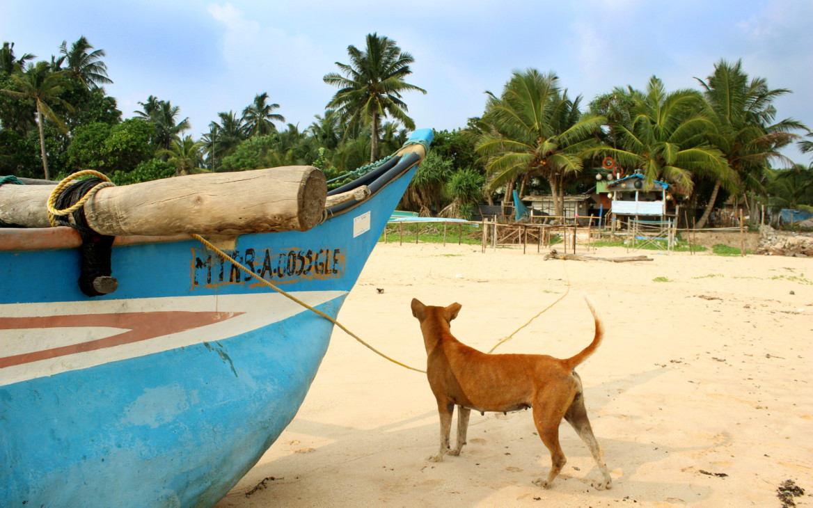 Malina in Asien #8: Beim Schildkröten-Projekt in Sri Lanka