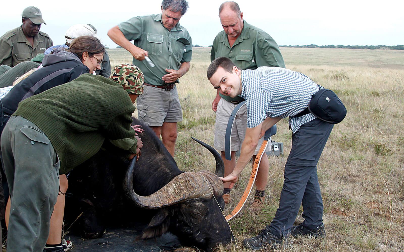 Nicolas und andere Männer beim Büffelaussetzen
