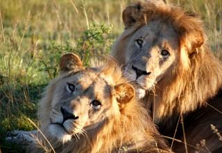 Erfahrungsbericht: Freiwilligenarbeit in Südafrika – Born to be wild!