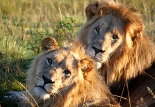 Freiwilligenarbeit Südafrika: Born to be wild!