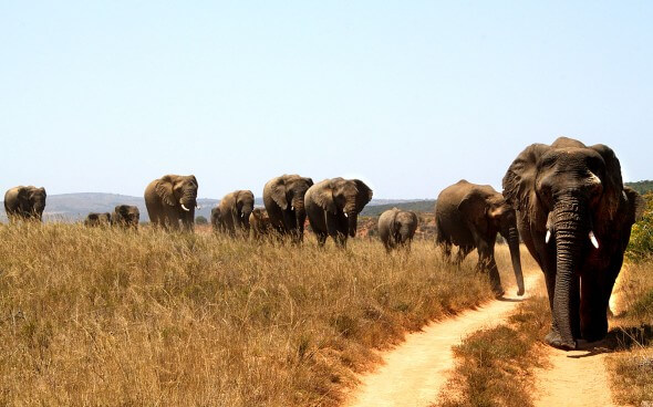 Wildlife-Projekt Südafrika: Elefantenherde