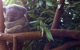 Koala-WP