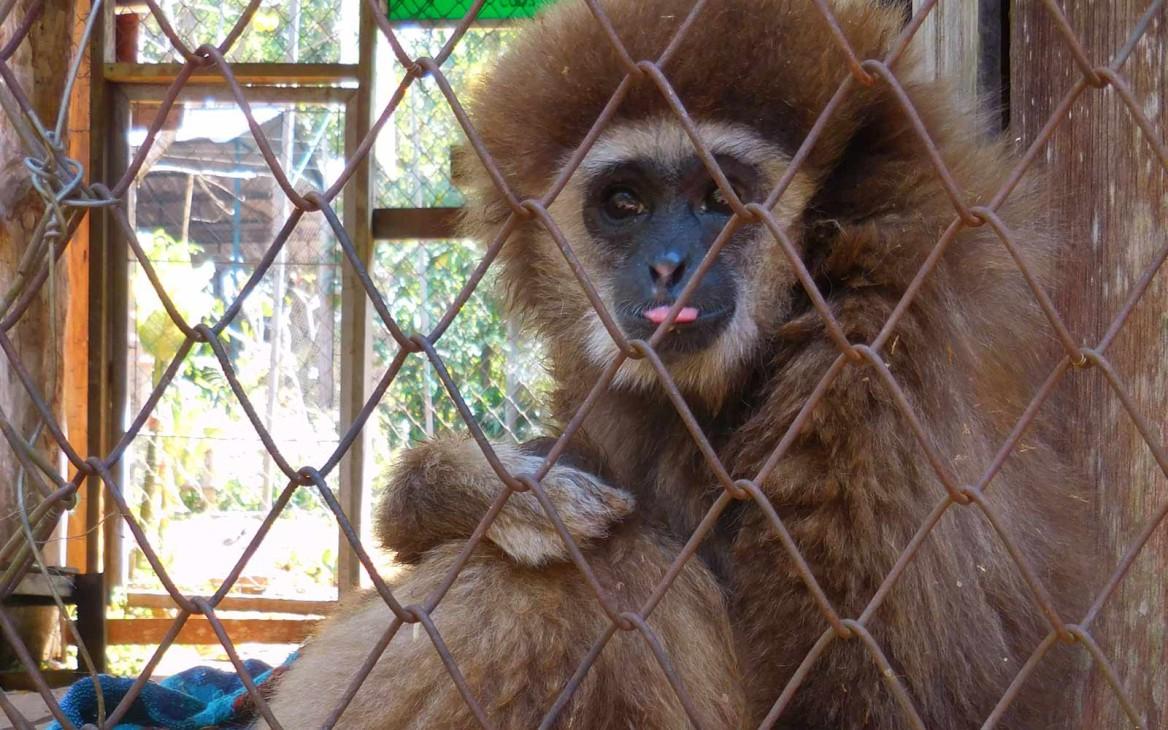 Erfahrungsbericht: Freiwilligenarbeit in Thailand – Affenprojekt