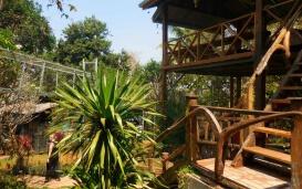 Das Volunteer House zwischen den Gibbons beim Affenprojekt in Thailand