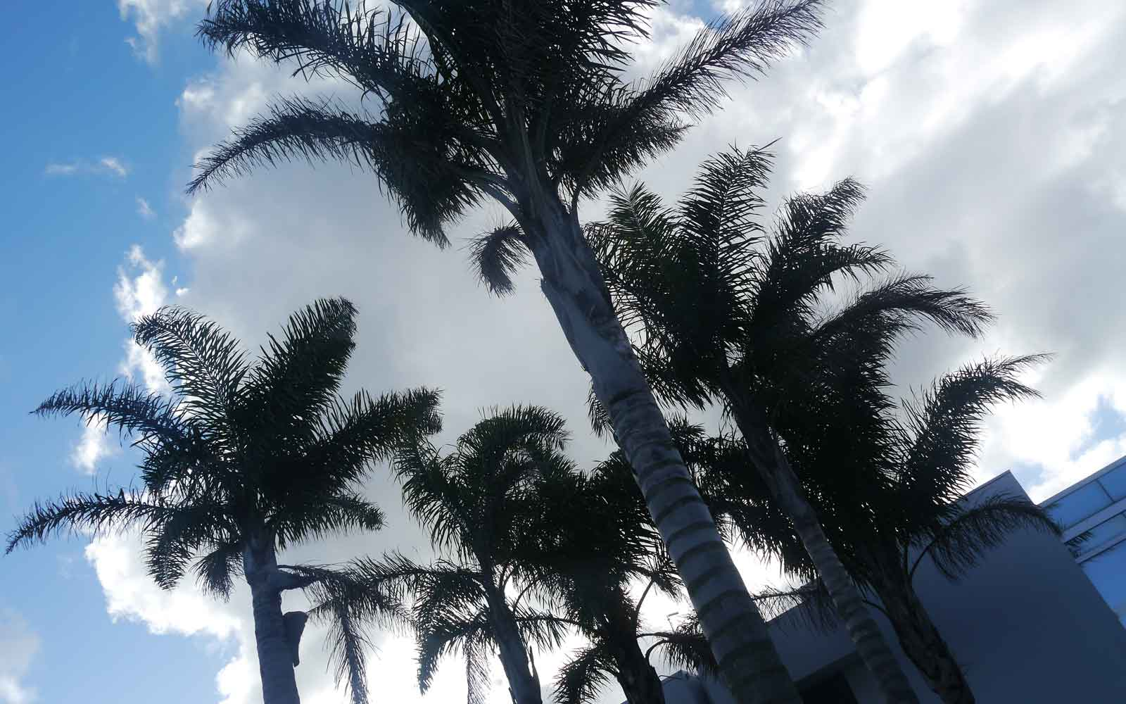 Palmen in Neuseeland