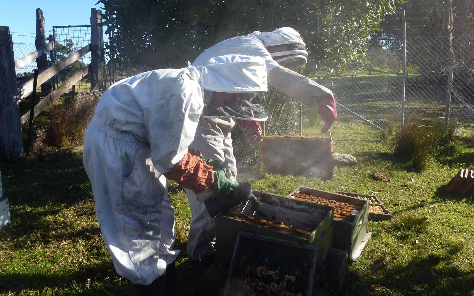 Stipendiatin Lara beim Imkern