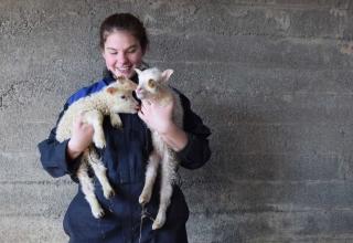 Farmarbeit in Island – Isabelle im Land der Feen und Trolle
