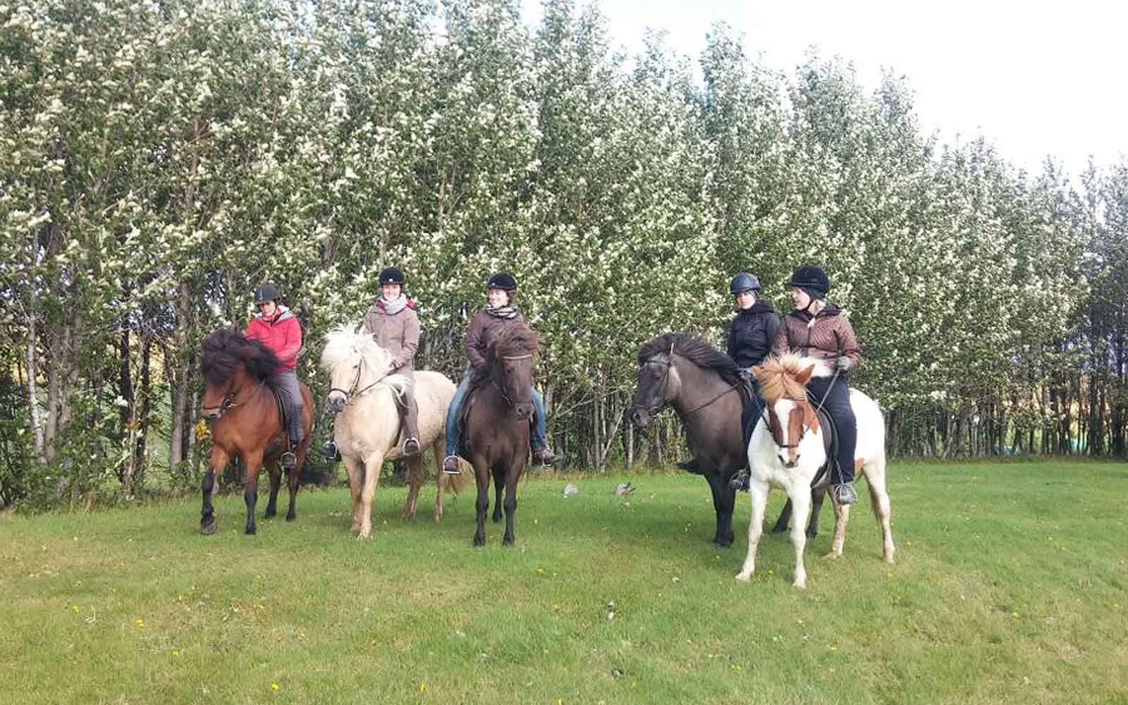Eine Gruppe von Mädchen bei einem Ausritt mit Island-Pferden