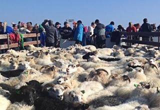 Farmarbeit in Island – Ninas Abenteuerreise