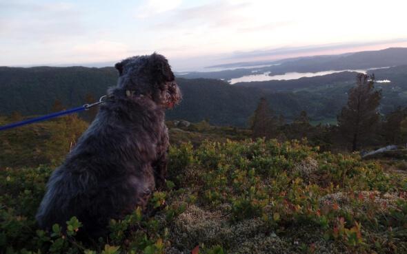 Ein Hund genießt die Aussicht in Norwegen