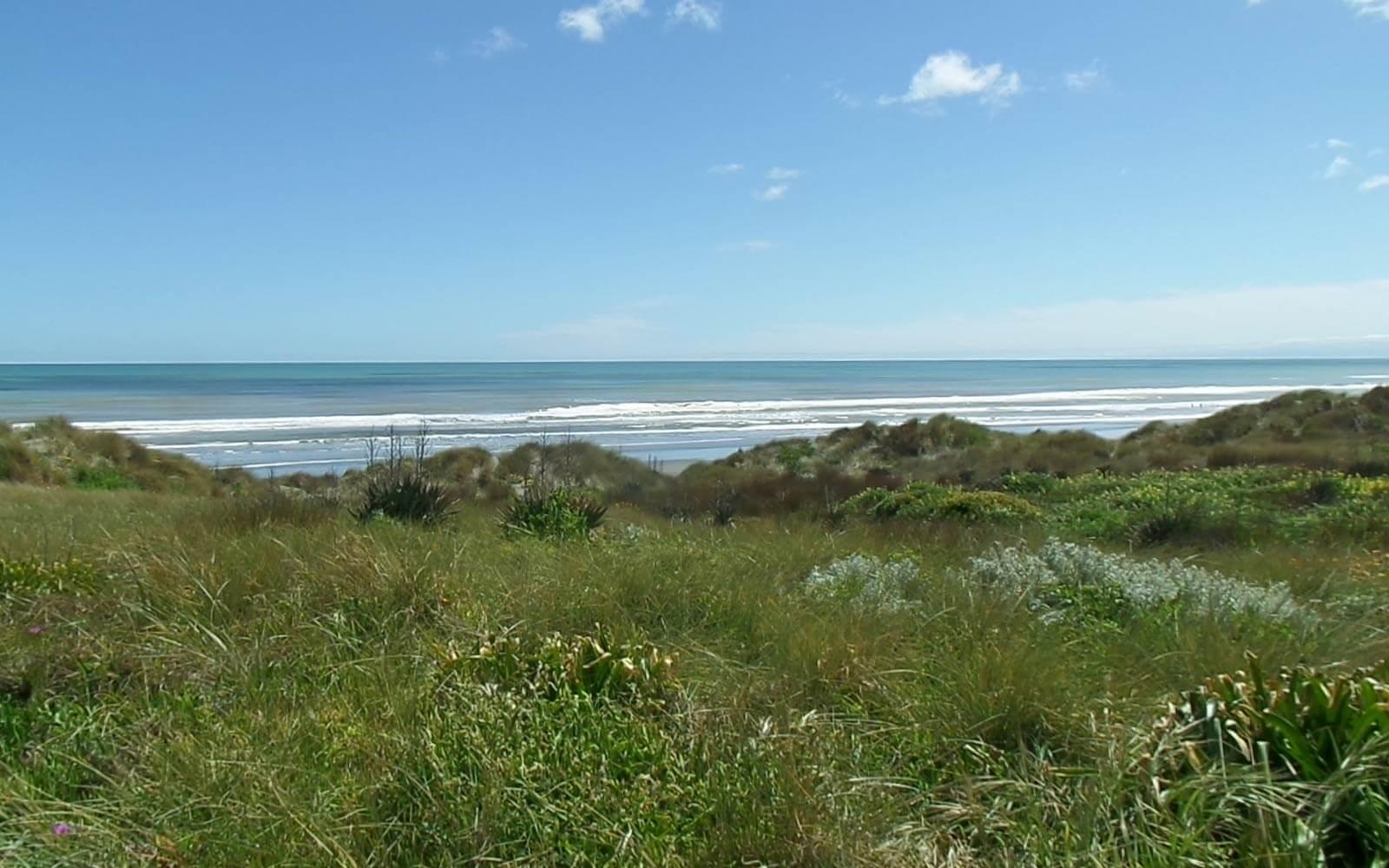 Gras, Meer und blauer Himmel in Neuseeland