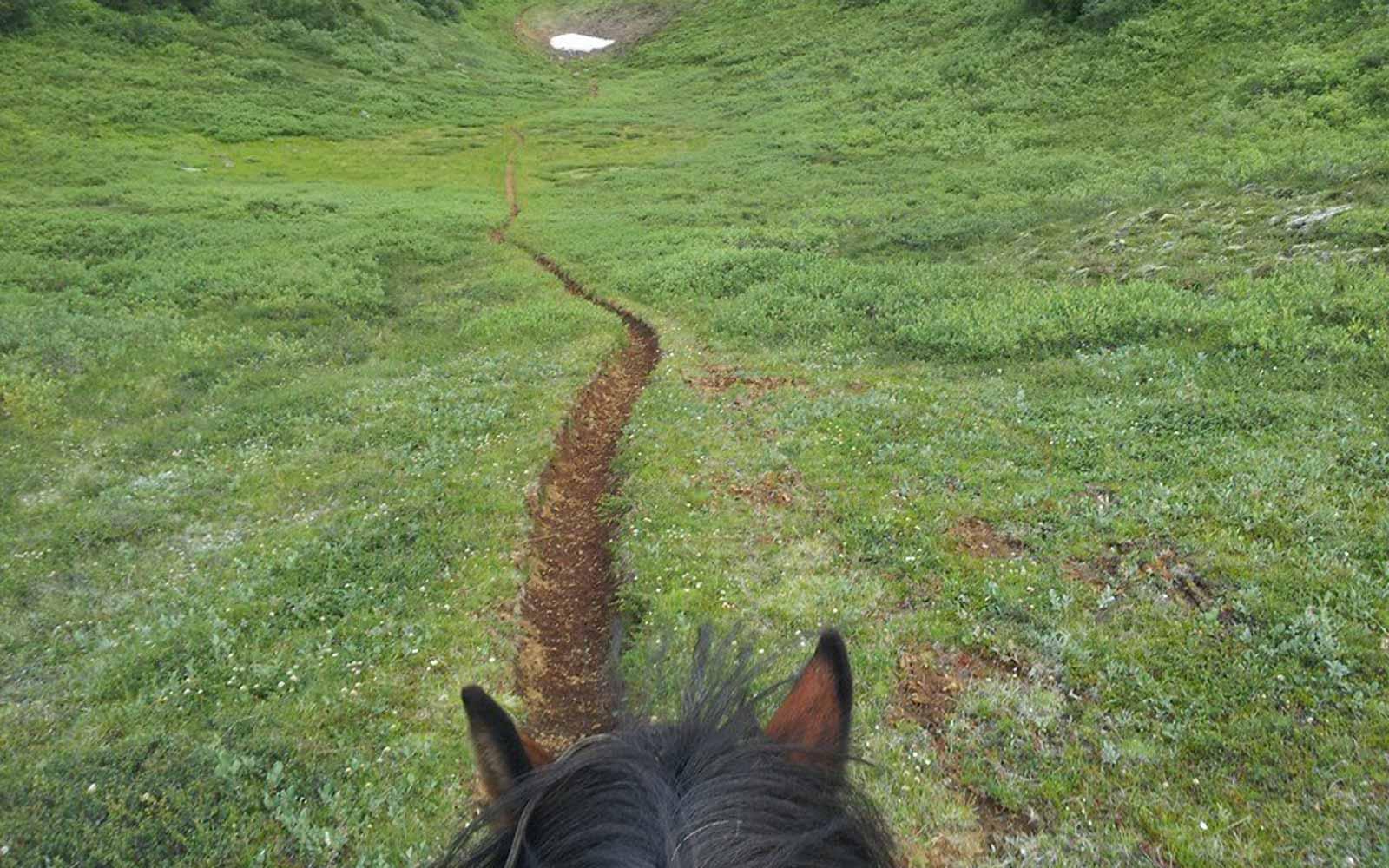 Ausritt durchs Grüne in Island