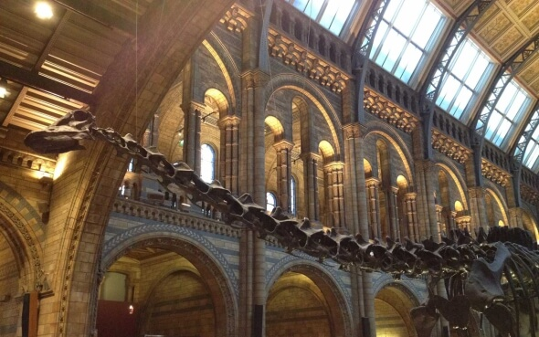 National History Museum London Dinosaurierskelett
