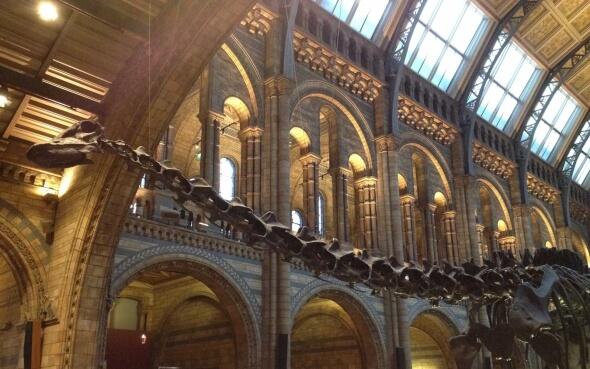National History Museum London Dinosaurierskelett