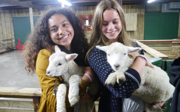 Sheep Show mit Lämmchen in Rotarua, Neuseeland