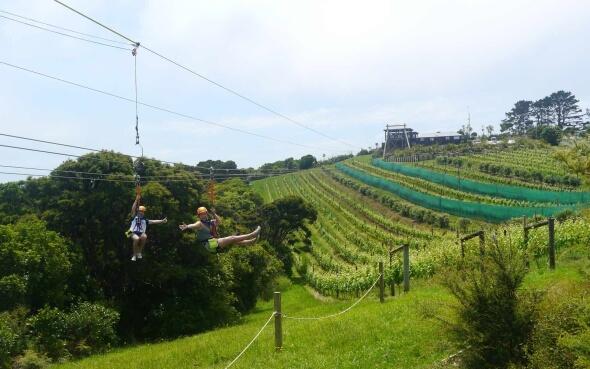 Zip Line-Fahrt auf Waiheke Island in Neuseeland