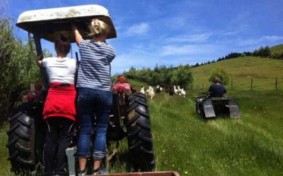 Alpakas fuettern per Traktor