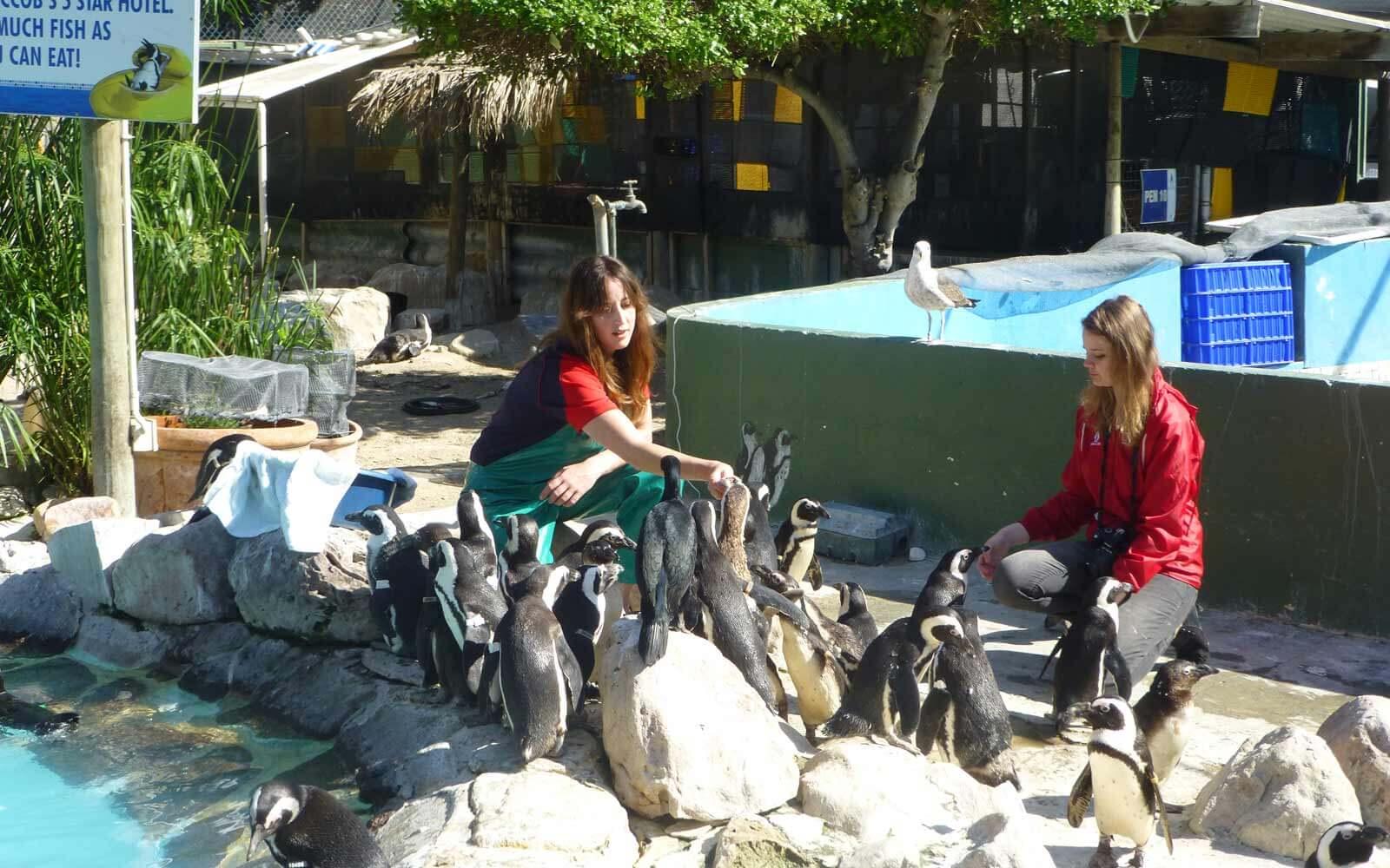 laras-amazing-race-pinguin-projekt5