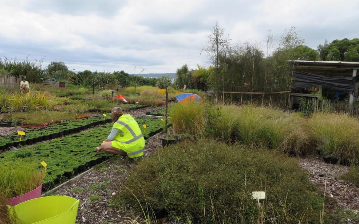 Natur pur: Freiwilligenarbeit in Neuseeland