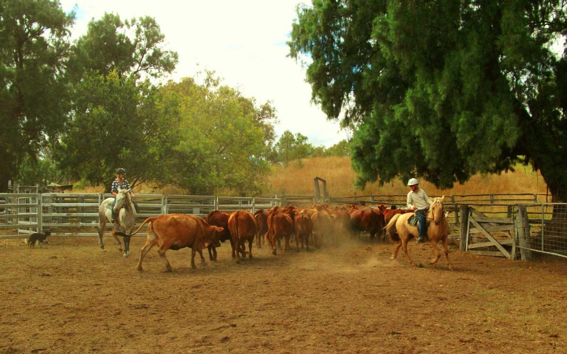 »Off The Path« Podcast: Fragen & Antworten zu Farmarbeit in Australien