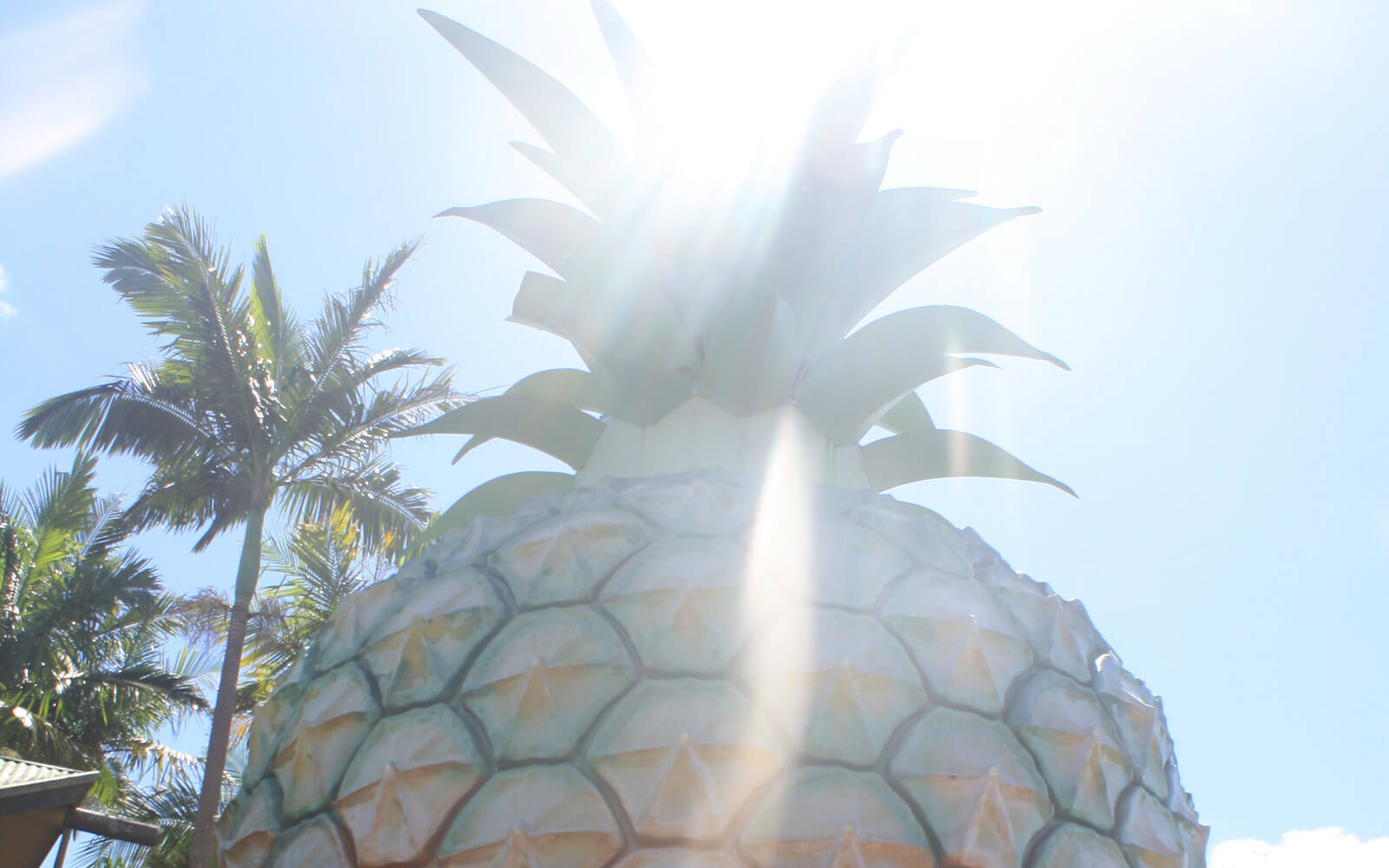 »Big Pinapple« in Queensland, Australien
